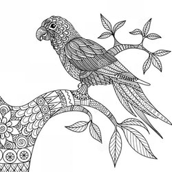 Ausmalbilder Ausdrucken Erwachsene Papagei Für Kostenlos Zum Lqmvzpjusg