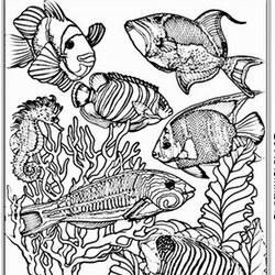 fische ausmalbilder für erwachsene kostenlos zum ausdrucken