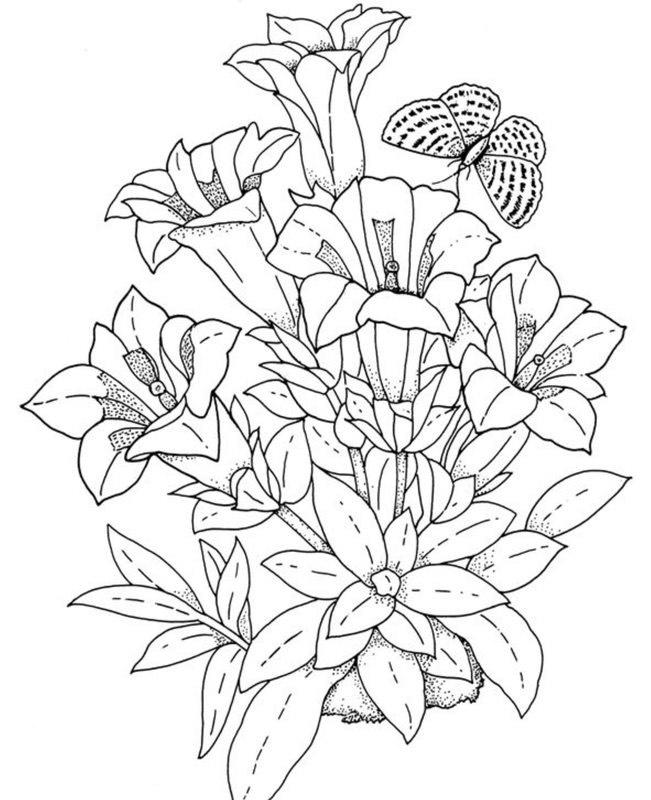 Pflanzen Ausmalbilder Für Erwachsene Kostenlos Zum Ausdrucken 1