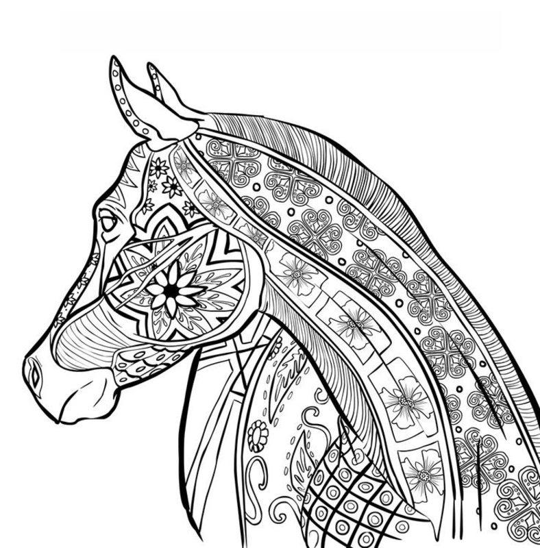 pferde ausmalbilder für erwachsene kostenlos zum