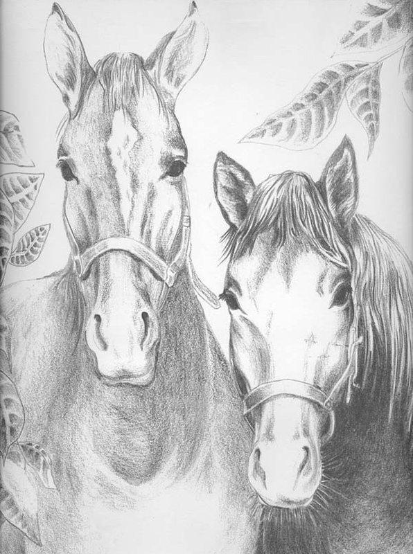 Pferde Ausmalbilder Fur Erwachsene Kostenlos Zum Ausdrucken Teil 2