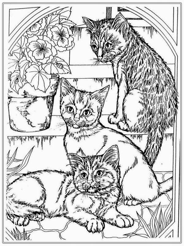 Katzen Ausmalbilder Für Erwachsene Kostenlos Zum Ausdrucken Teil 1
