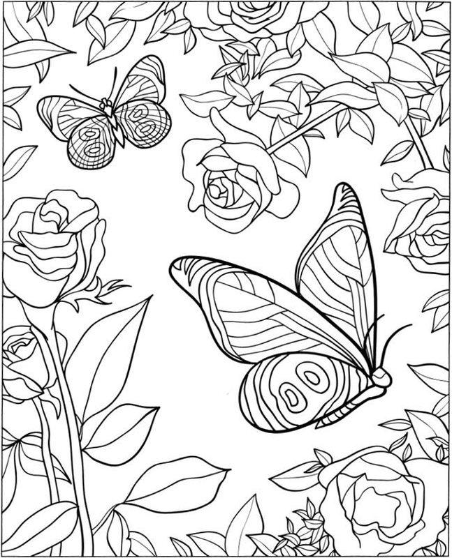 Schmetterlinge Ausmalbilder Für Erwachsene Kostenlos Zum Ausdrucken