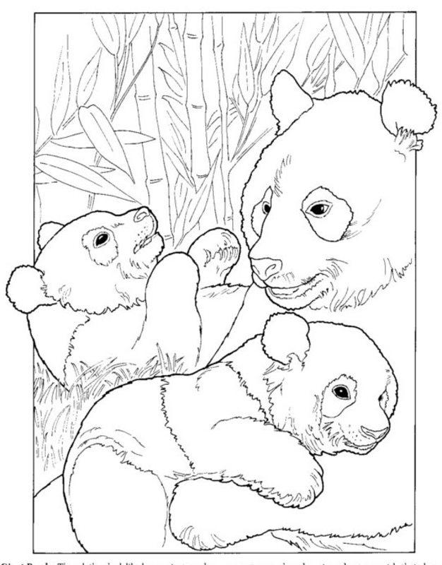 Pandabär Ausmalbilder für Erwachsene kostenlos zum ...