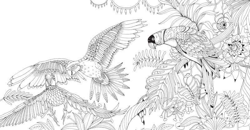 Papagei Ausmalbilder Für Erwachsene Kostenlos Zum Ausdrucken Teil 1
