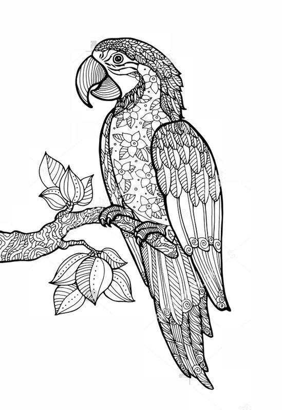 kleurplaten voor volwassenen downloaden papagei