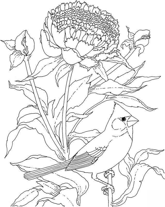 vögel ausmalbilder für erwachsene kostenlos zum ausdrucken