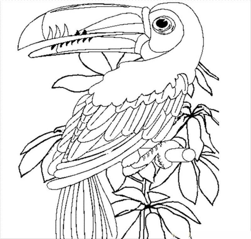 Vögel Ausmalbilder Für Erwachsene Kostenlos Zum Ausdrucken Teil 5