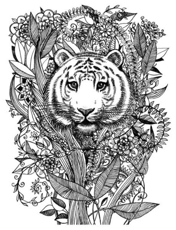 Tiger Ausmalbilder Für Erwachsene Kostenlos Zum Ausdrucken Teil 2